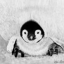 George Sonner - Penquin Chick