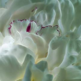 Peony Flower Energy by Beth Sawickie
