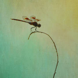 Perched Dragonfly at St. Marks by Carla Parris