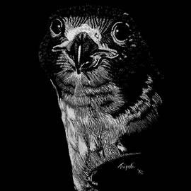 Lawrence Tripoli - Peregrin Falcon