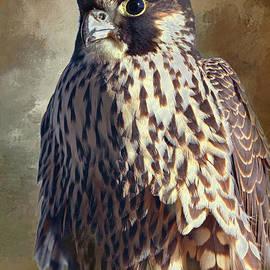 Peregrine Falcon Art Portrait by Regina Geoghan