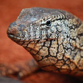 Michelle Wrighton - Perentie Monitor Lizard Color
