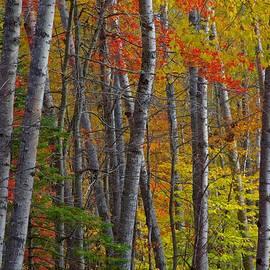 Glenn Baja - Perfect Fall Day