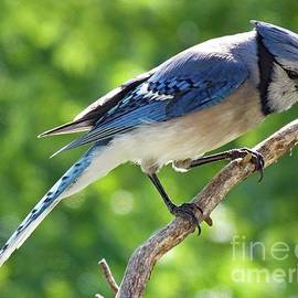 Cindy Treger - Perfect Timing - Blue Jay