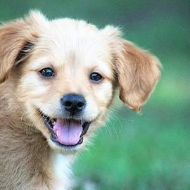 Perfectly Puppy by Mary Ann Artz