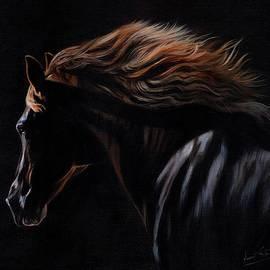 David Stribbling - Peruvian Paso Horse