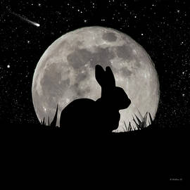 Brian Wallace - Peter Cottontail