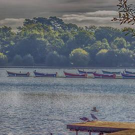 Angela Aird - Petersfield Lake.