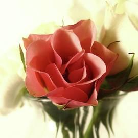 Mary Ellen Frazee - Petite Bouquet