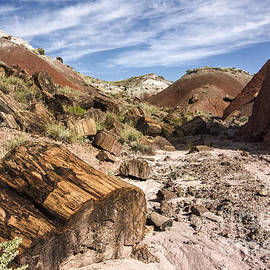 Petrified Wood In The Painted Desert by Melany Sarafis