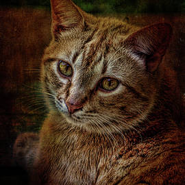 Lesa Fine - Pets Fat Cat Portrait 2