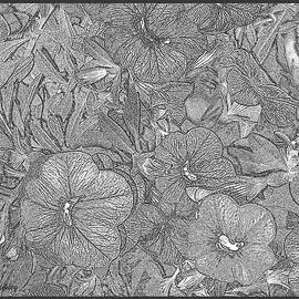 Lessandra Grimley - Petunias