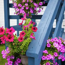 Petunias On Blue Porch by Elena Elisseeva