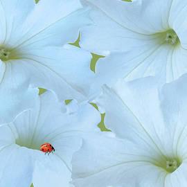 Spadecaller - Petunias Petunias