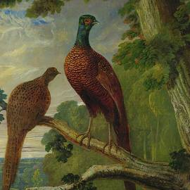 Pheasants by John Frederick Herring