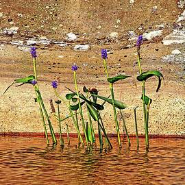 Debbie Oppermann - Pickerel Weed Showcased