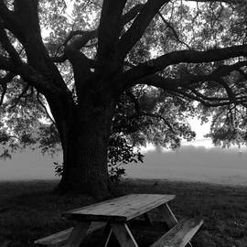 Picnic by Robin Lewis