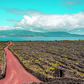 Pico Island Vineyard 01 by Edgar Laureano