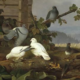 Pigeons - Ferdinand von Wright
