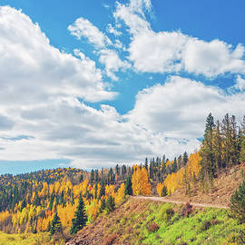 Pike National Forest Is 1,100,000 Acres Or 4400 Square Kilometers.  by Bijan Pirnia