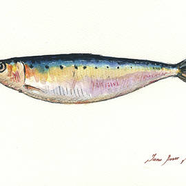 Pilchard watercolor - Juan Bosco