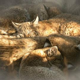 Mary Lee Dereske - Pile of Sleeping Bobcats