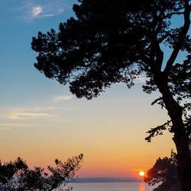 Delphimages Photo Creations - Pine tree