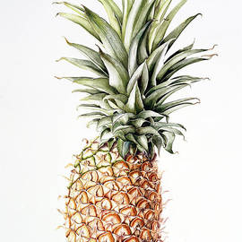 Pineapple - Alison Cooper