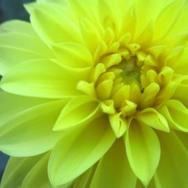 Samuel Groeschl - Pineapple Cream