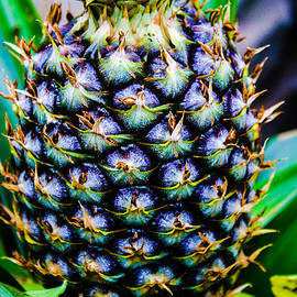 Pineapple by Stacey Rosebrock