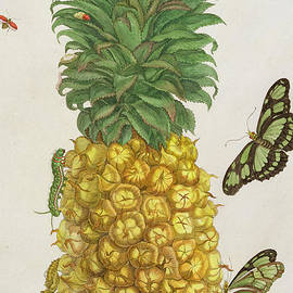 Pineapple with caterpillar and butterflies - Pieter Sluyter