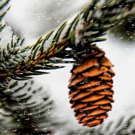 Pat Cook - Pinecone in a Snowstorm