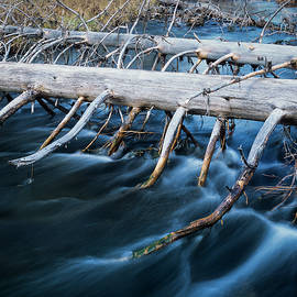 Pines Over The River by Robert Potts