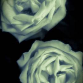Pinhole rose 3004 by Rudy Umans