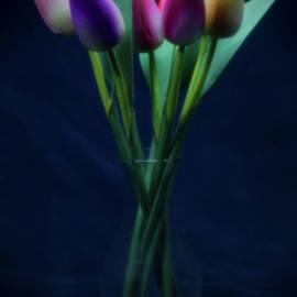 Pinhole tulips