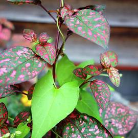 Pink And Green Plants by Jacqueline Athmann