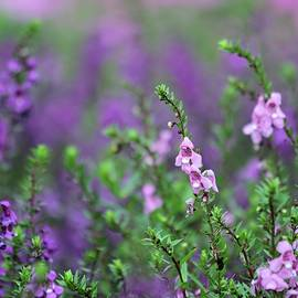 Pink and Purple Flowers by Sabrina L Ryan