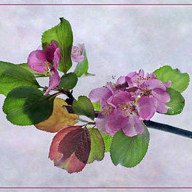 Pink Apple Blossom Springtime by Robert Murray