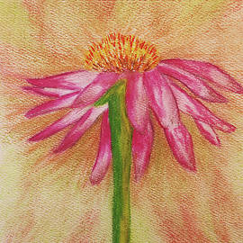 Pink Cone Flower by Susan Campbell