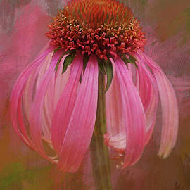 Pink Coneflower by Isabela and Skender Cocoli