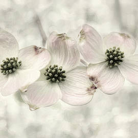 Lori Deiter - Pink Dogwood Blossoms