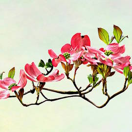 Susan Savad - Pink Dogwood