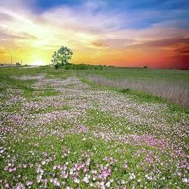 Pink Evening Primrose Sunset by Lynn Bauer