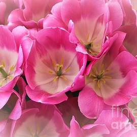 Jane Powell -  Pink favor