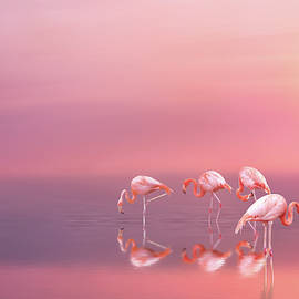 Pink flamingos by Lilia D