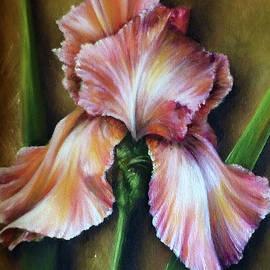 Pink Iris by Debora Schubert Lytle