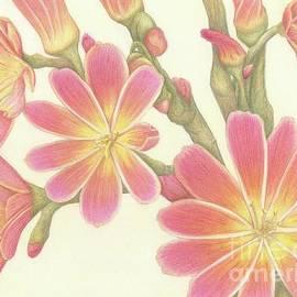 Pink Lewisia by Tammie Painter