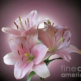 Brenda Spittle - Pink Lillies