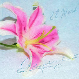 Cathy Kovarik - Pink Lily