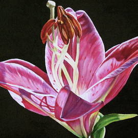 Pink Lily by Lillian Bell